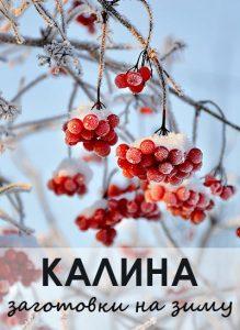 калина рецепты приготовления на зиму