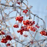 рецепты с калиной на зиму