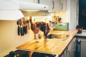 грязь на кухонном столе