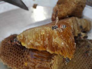 как определить натуральный мед