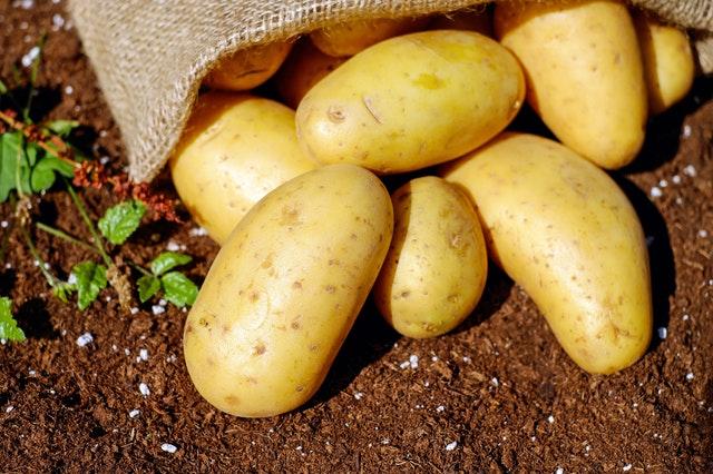 можно ли есть зеленый картофель