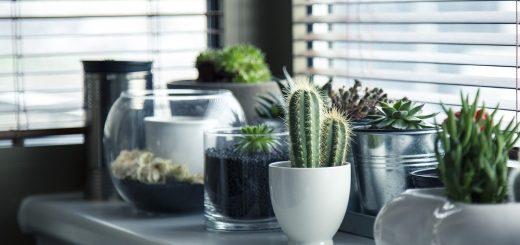 как ухаживать за кактусами